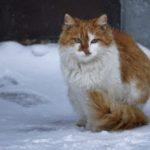 Бездомные кошки 051