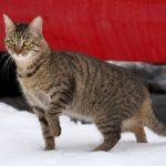 Бездомные кошки 052