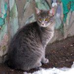 Бездомные кошки 053
