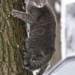 Бездомные кошки 054