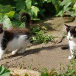 Бездомные кошки 056
