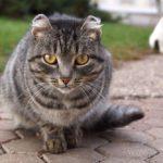 Бездомные кошки 058