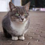 Бездомные кошки 059