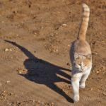 Бездомные кошки 060
