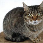Бездомные кошки 066