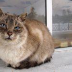 Бездомные кошки 067