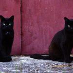 Бездомные кошки 068