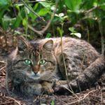Бездомные кошки 070