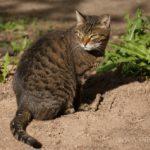 Бездомные кошки 071