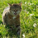Бездомные кошки 072