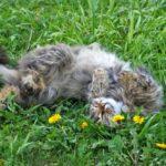 Бездомные кошки 074
