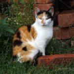 Бездомные кошки 075