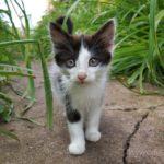 Бездомные кошки 079