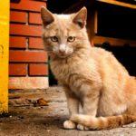 Бездомные кошки 081