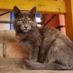 Бездомные кошки 082