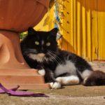 Бездомные кошки 083