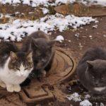 Бездомные кошки 086