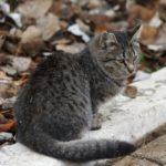 Бездомные кошки 087