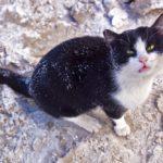 Бездомные кошки 088