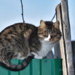 Бездомные кошки 089