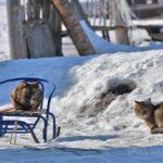 Бездомные кошки 090