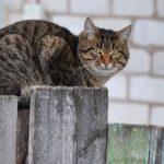 Бездомные кошки 094