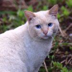 Бездомные кошки 095