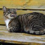 Бездомные кошки 096