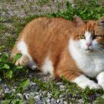 Бездомные кошки 098