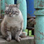 Бездомные кошки 102