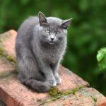 Бездомные кошки 104