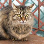 Бездомные кошки 110