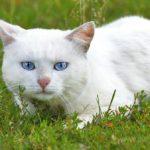 Бездомные кошки 111