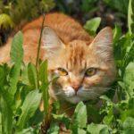 Бездомные кошки 112