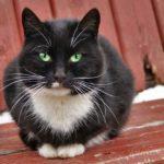 Бездомные кошки 113