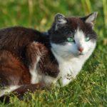Бездомные кошки 114
