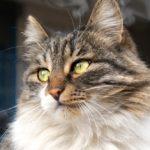 Бездомные кошки 115