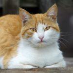Бездомные кошки 116