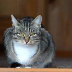 Бездомные кошки 117