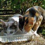 Бездомные кошки 118