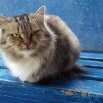 Бездомные кошки 119