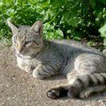 Бездомные кошки 120