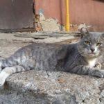 Бездомные кошки 123