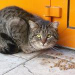 Бездомные кошки 126
