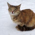 Бездомные кошки 127