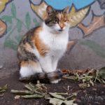 Бездомные кошки 128