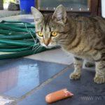 Бездомные кошки 129
