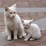 Бездомные кошки 130