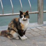 Бездомные кошки 131
