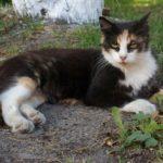 Бездомные кошки 132